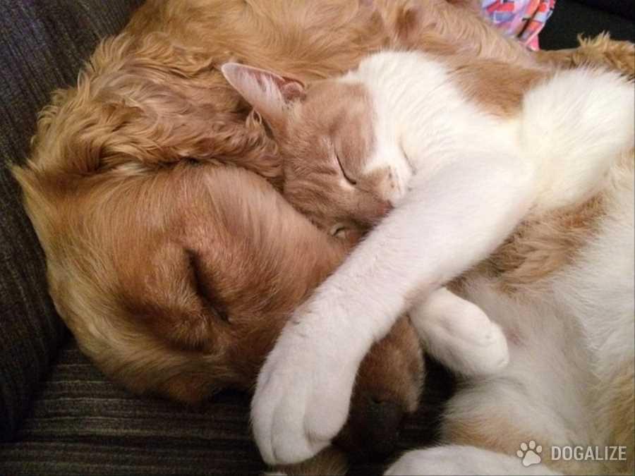 Cani e gatti non saranno più pignorabili   Dogalize