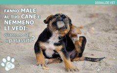 Malattie del cane: Quanto ne sai di parassiti del cane?
