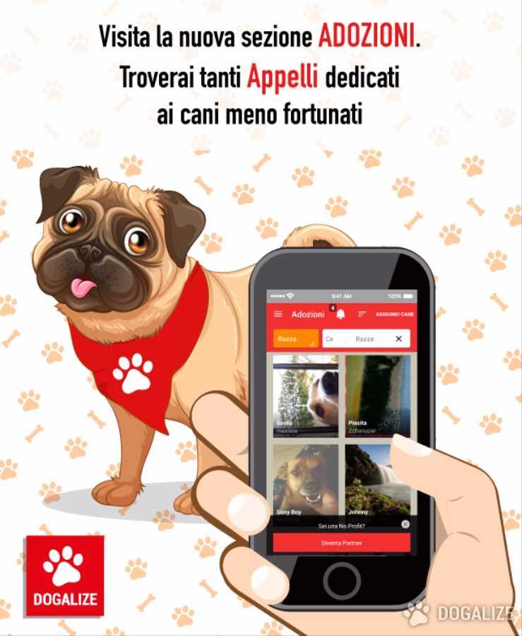 Sezione Adozioni: Pubblica gli annunci adozioni animali