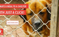 Dogalize initiative: Donate a meal with a click