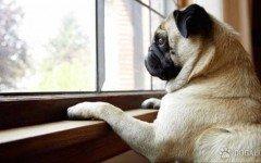 5 preguntas para averiguar si tu perro te quiere