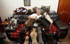 testamento animali Lascia la sua casa ai suoi 41 cani