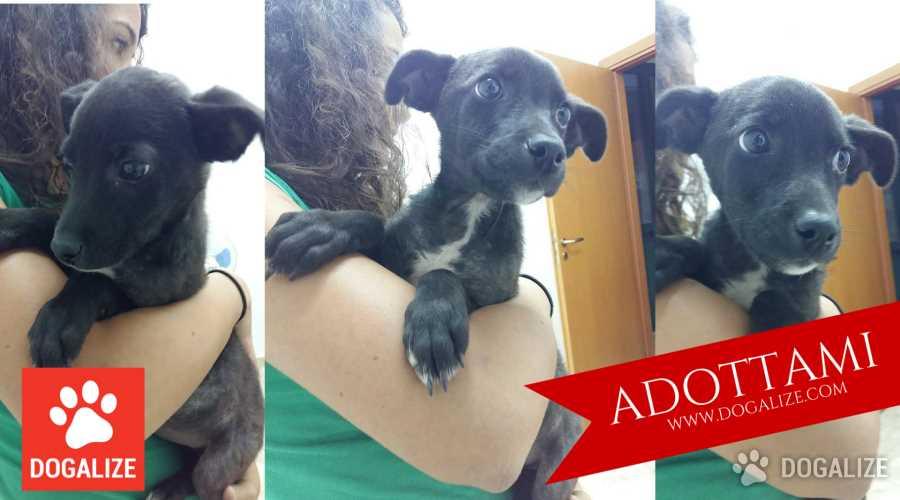 Adotta un cucciolo, Checco è un cucciolo che cerca una famiglia da amare dacciunazampa