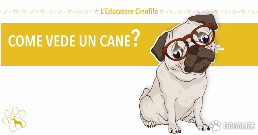 Come vede un cane? quali colori vedono i cani ?| Dogalize