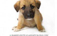 cane cuccioli dogalize