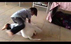 Bambini e cani: Insegnare ai figli il rispetto