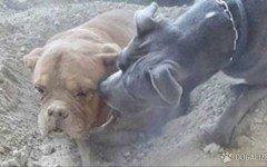 seppellisce cane vivo
