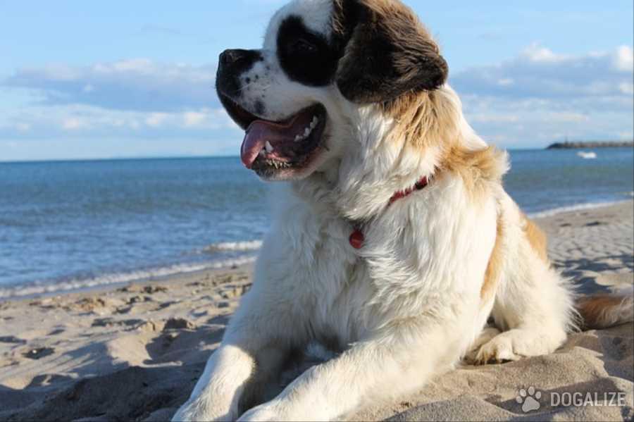 Vacanze animali: Consigli per le vacanze con cane e gatto