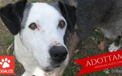 ADOTTAMI: Appello adozioni canile