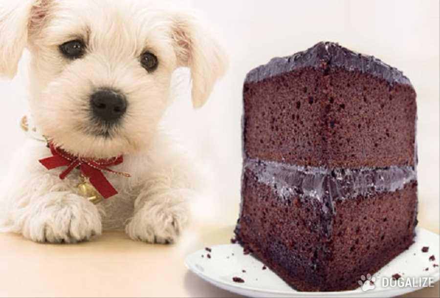 Un riquisimo dulce para tu perrito!
