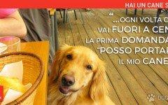 Hai un cane se. voglio solo ristoranti Pet friendly