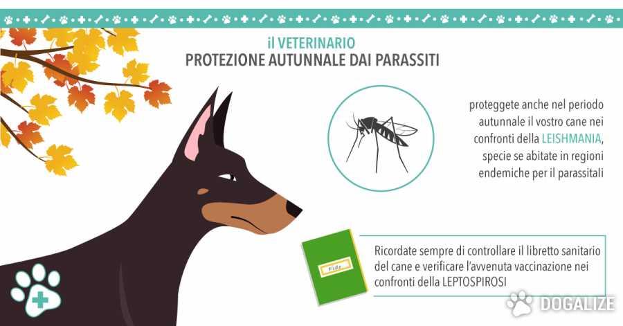 Le vaccinazioni del cane: Leptospirosi e Leishmaniosi
