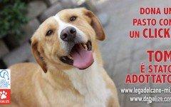 Lega Nazionale per la difesa del cane: Dona un pasto!
