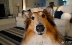 I cani odiano e ignorano i nemici del loro amico umano: lo dice uno studio | Dogalize