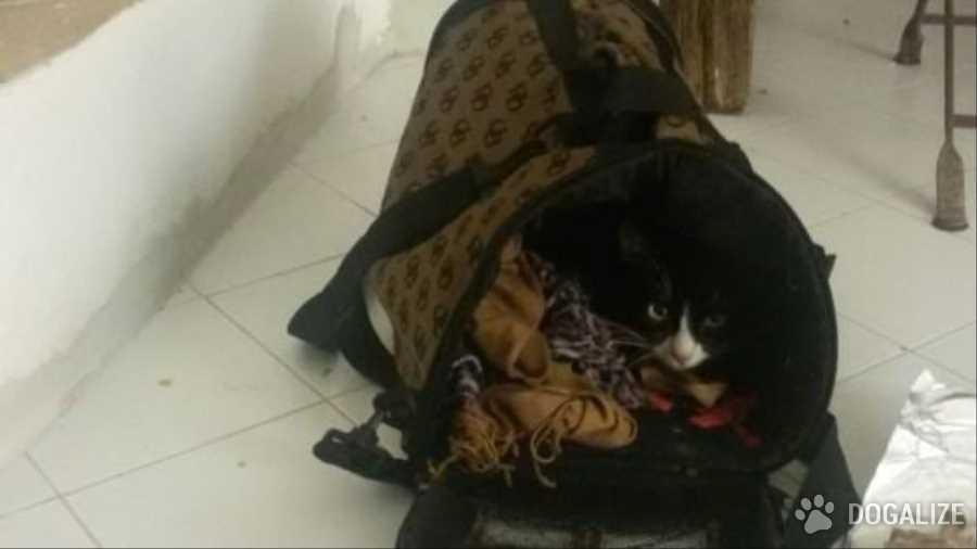 Lola è una gattina che non ha nemmeno un anno, ma è già diventata famosa per essere stata la prima micia immigrata, sbarcata a Lampedusa.