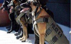 Miami, chalecos anti-balas para perros policia