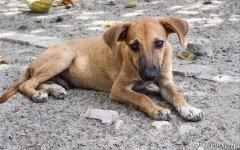 Cani avvelenati a San Marco in Lamis
