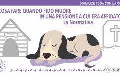 Pensione per cani: che cosa fare se il cane muore in pensione ? Vediamo qui cosa dice in merito l'art.1768 del Codice Civile