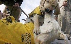 La Fundacion del Perro Guìa Ciegos celebra 25 años