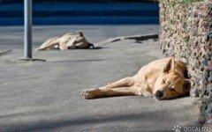 Cane randagio avvelenato ad Agrigento| Dogalize
