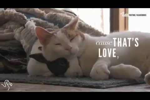Ternura entre gatitos y conejitos! Aqui amamos todos los animales!