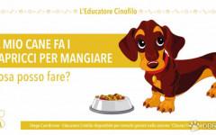 Il mio cane non vuole mangiare. Cosa posso fare?