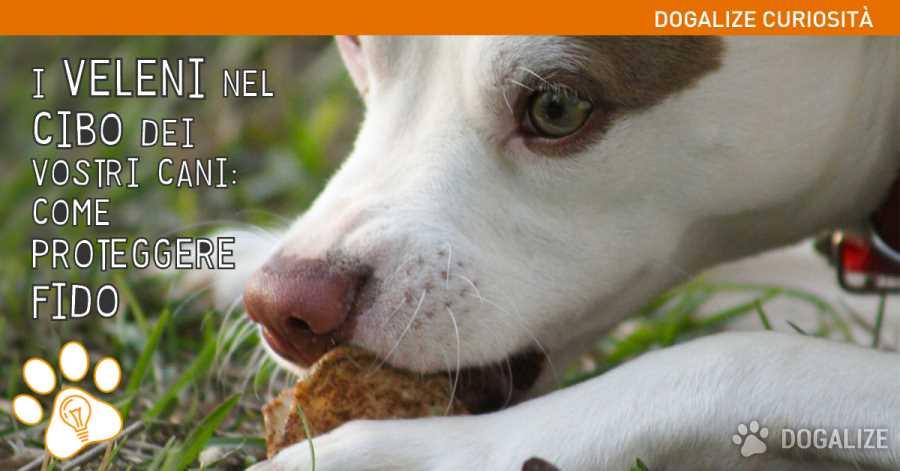 Alimentazione cani: Leggi le etichette: i cibi velenosi per cani