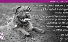 Perchè il tuo cane annusa per terra? | Dogalize