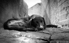 Brasile: Dei balordi danno fuoco a due poveri cani che si stanno accoppiando: uno di loro muore dopo giorni di terribile agonia