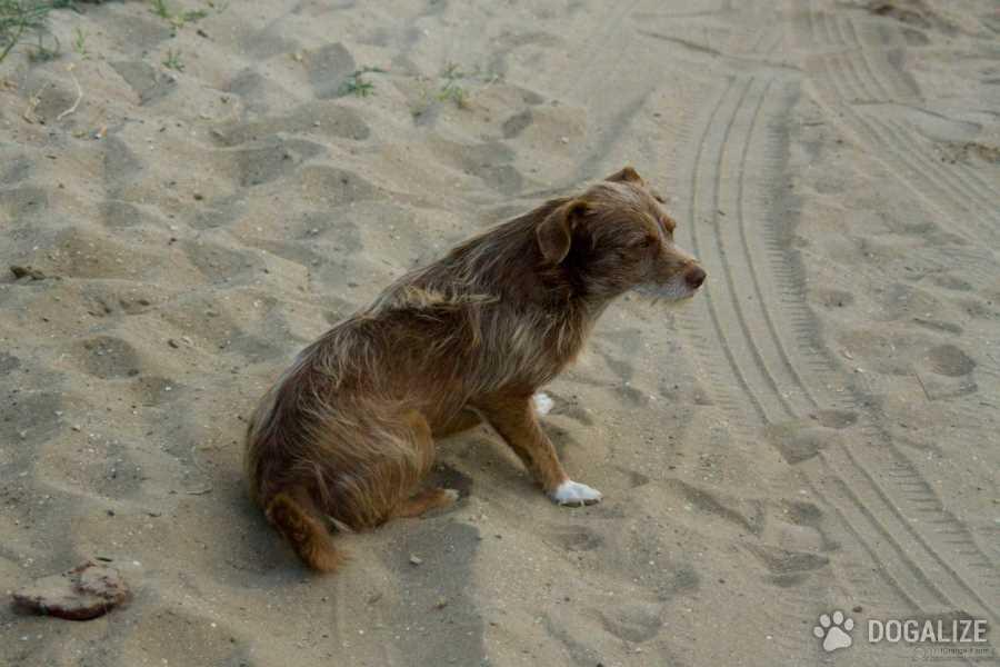 Creta: due turiste italiane adottano un cagnolino