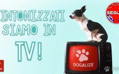 pet therapy in tv