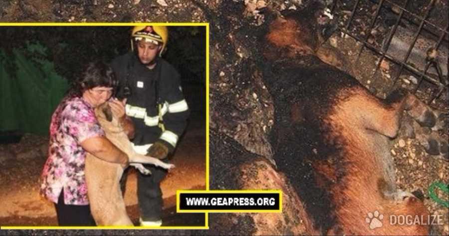 """Pare di origine dolosa l' incendio appiccato al rifugio di cani della Galilea """"Let the Animals Live"""". Forse hanno lanciato qualcosa dall'esterno."""