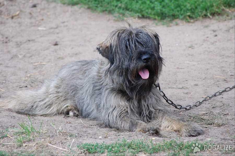 Denunciato per maltrattamento di animali. Accattonaggio cane