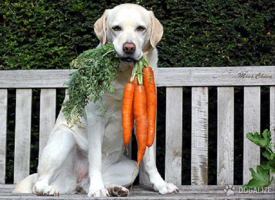 Uno snack vegetal para tu perro