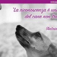 Cane E Gratitudine Frasi Sugli Animali Dogalize