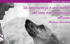 Cane e gratitudine: frasi sugli animali