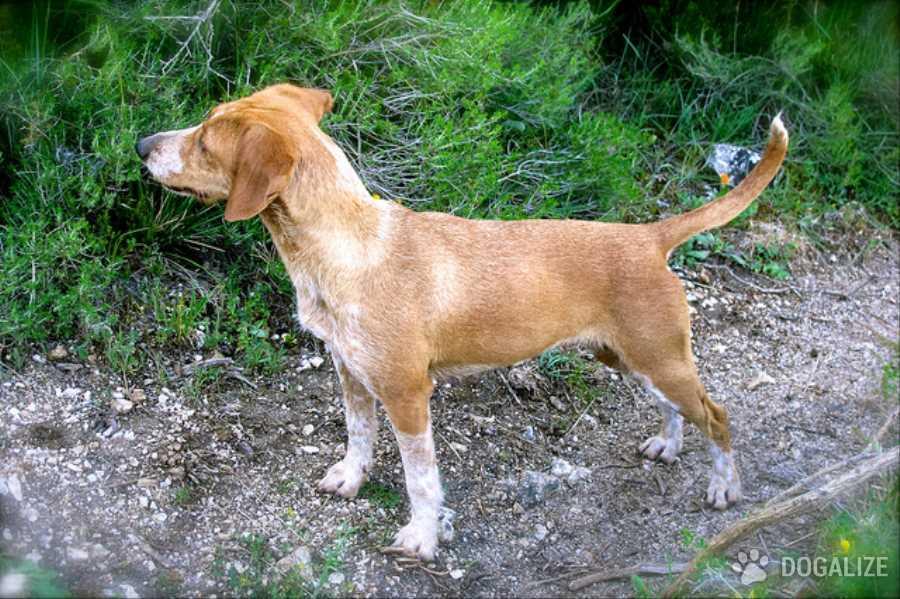 Trovato Cane in stato confusionale: era cercato dalla sua famiglia | Dogalize