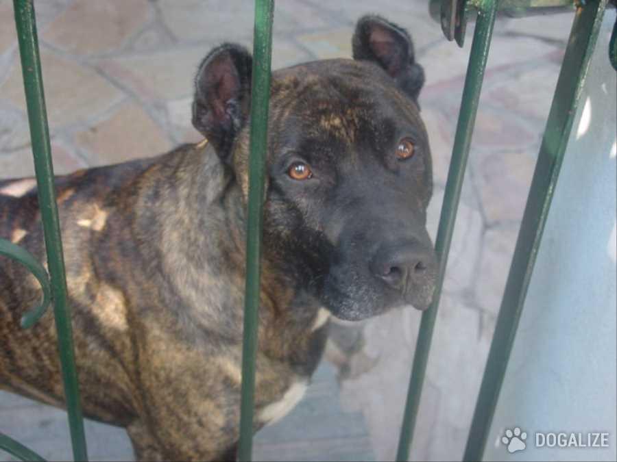 AIDAA Abbandono Animali: Diminuiscono gli abbandoni