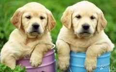 Perros Argentina: estrenan el Registro Nacional