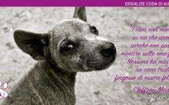 I cani non mentono: Frasi animali