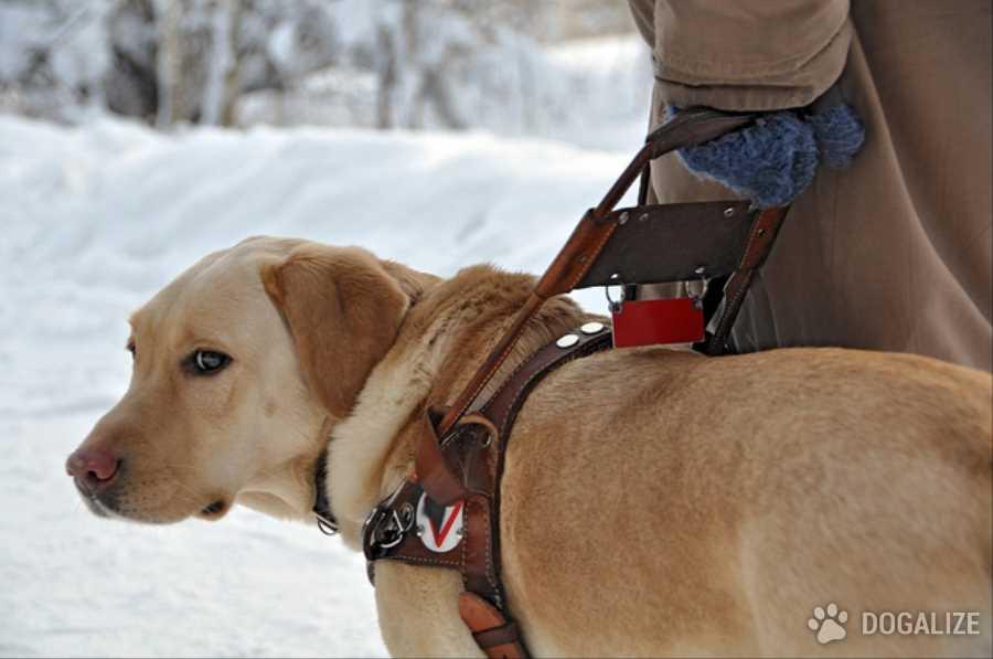 Cane guida non puo entrare: Ragazza cieca cacciata da un ristorante
