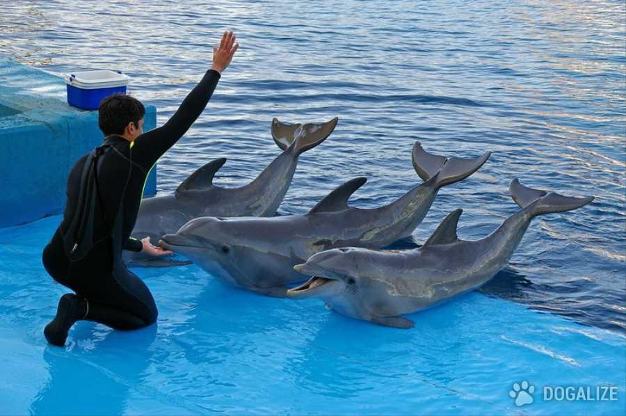 Maltrattamento: È iniziato il 7 maggio scorso il processo al Delfinario di Rimini, con l'accusa di maltrattamento dei 4 delfini