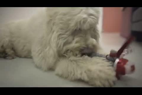 Perros famosos: Fallece perro de Robbie Williams
