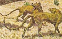 Hace mas de 12 mil años, ya domesticaban perros!