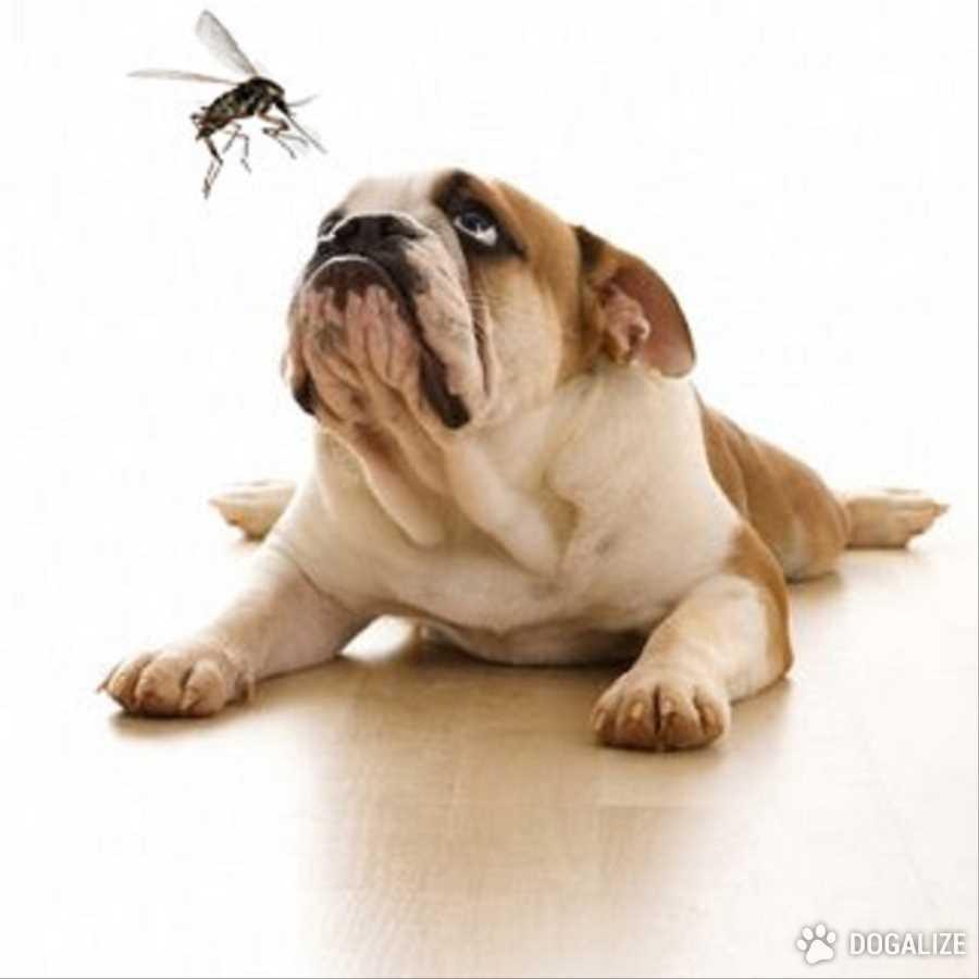 Cuidado con los mosquitos: pueden ser fatales