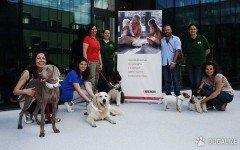 """Oggi, 26 Giugno, è la """"Giornata Mondiale del Cane in Ufficio """", anche nota come """"Take Your Dog to Work Day""""?"""