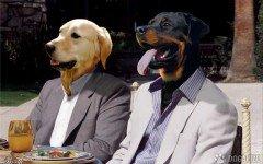 Mexico: el mercado de las mascotas crece de 8%