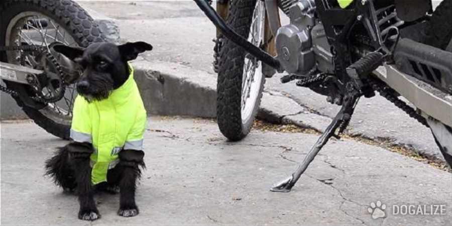 Un apreciamiento para Nero, el perro policia de Bogota!