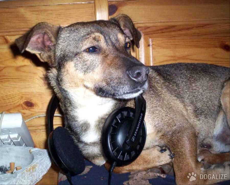 Musicoterapia in canile e nei gattili : La musica è terapia! La dottoressa Pamela Fisher ha dato vita al Rescue Animal MP3 Project. Una playlist per animali nei canili