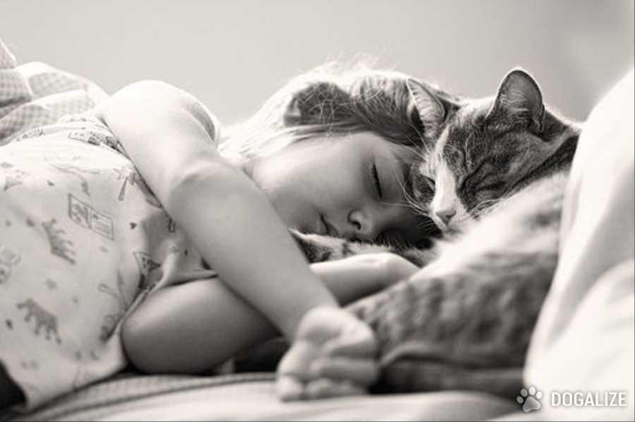 Gatto salva bambino da proiettile vagante | Dogalize